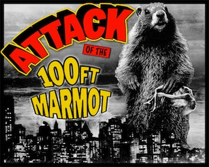 Attack of the big marmots!